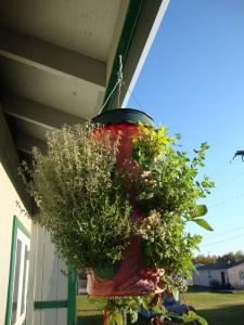 ~Hanging Herbs~